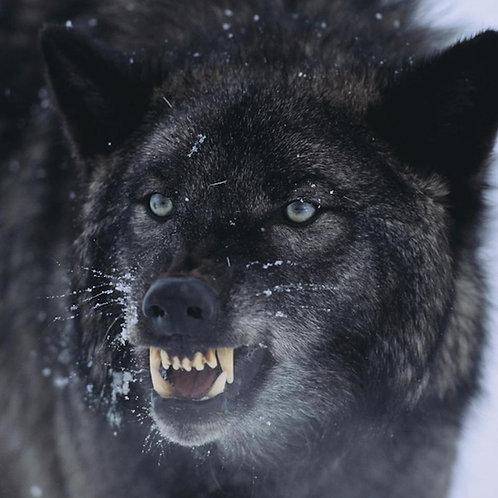 Fenris the Wolf - A Viking Tragedy