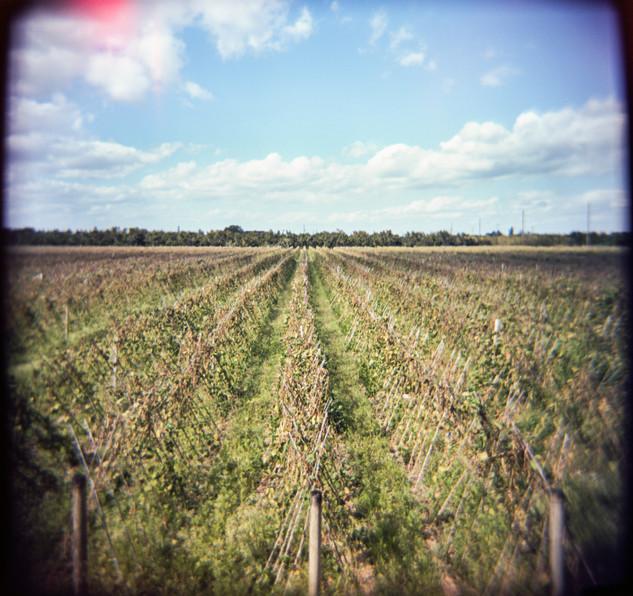 Farmland Series #24