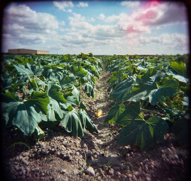 Farmland Series #22