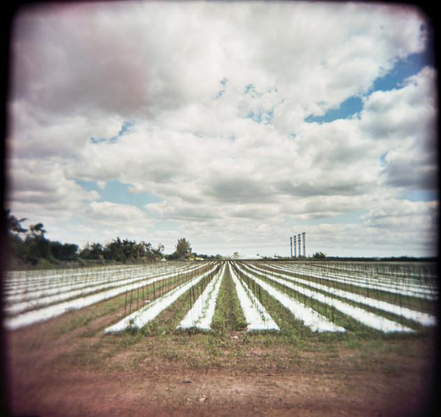 Farmland Series #11