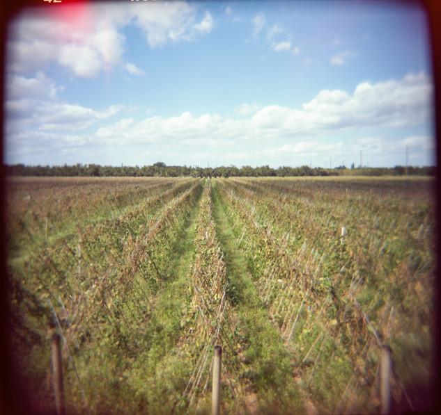 Farmland Series #14