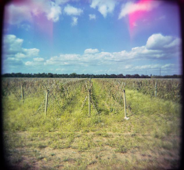 Farmland Series #3
