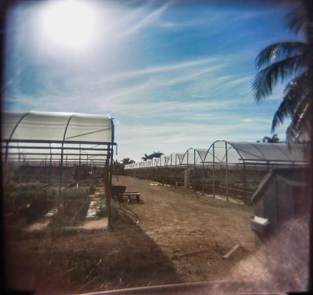 Farmland Series #32