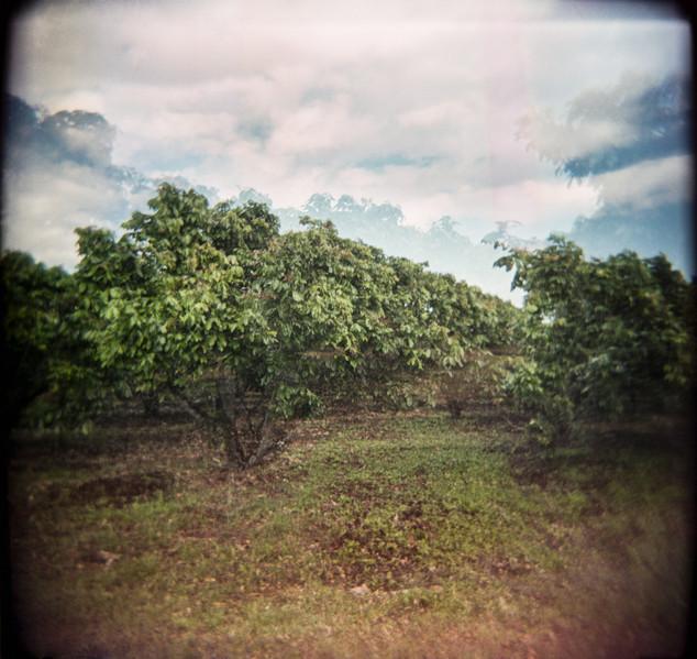 Farmland Series #26