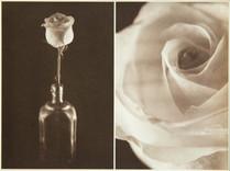 Rosa Album