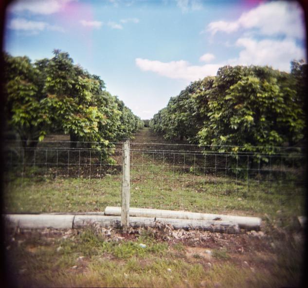 Farmland Series #29