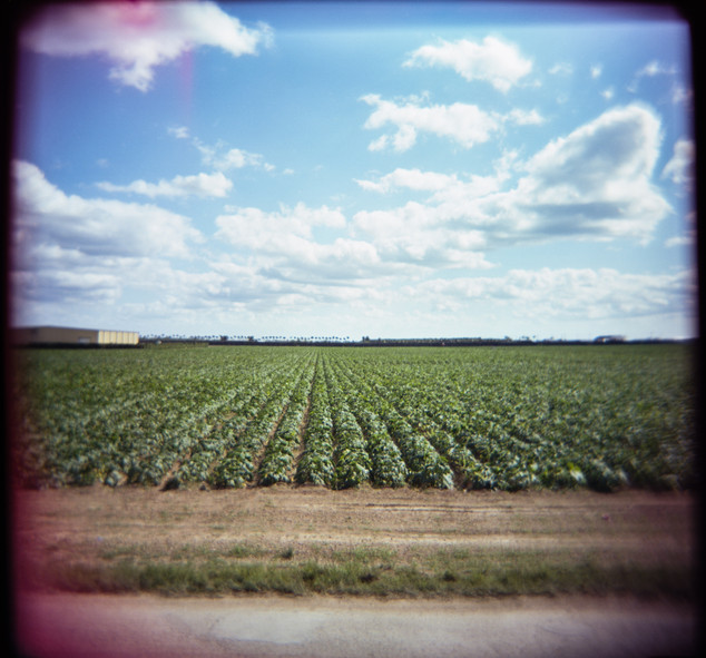 Farmland Series #7