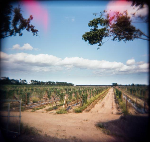 Farmland Series #6