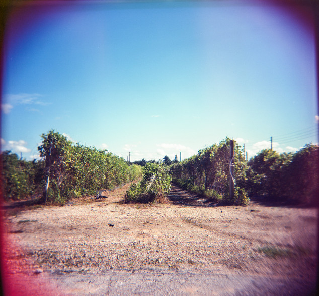 Farmland Series #36