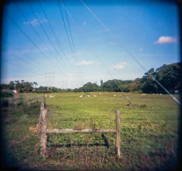 Farmland Series #10