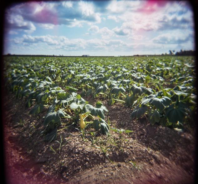 Farmland Series #31