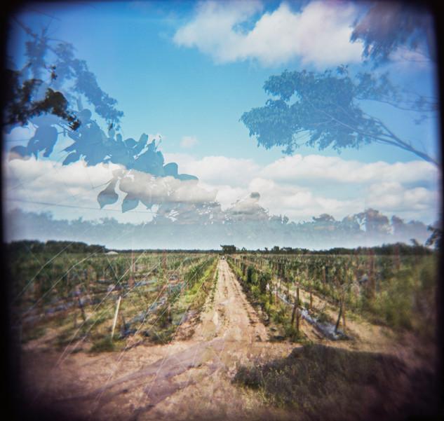 Farmland Series #23