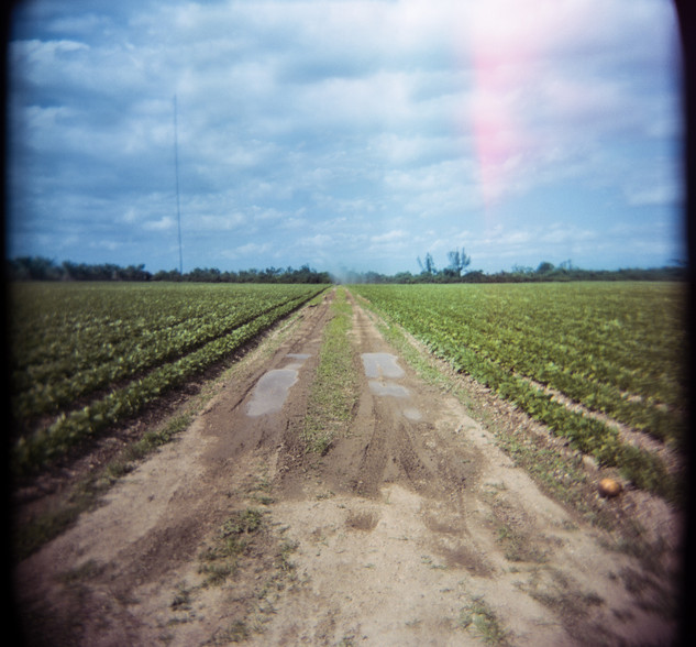 Farmland Series #16