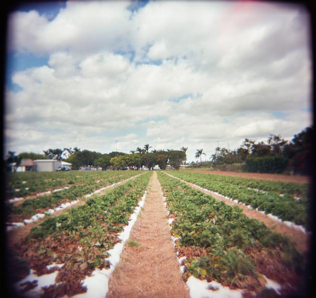Farmland Series #28