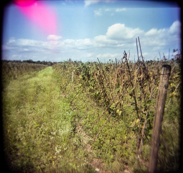 Farmland Series #2