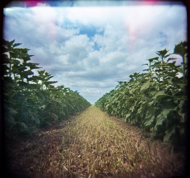 Farmland Series #4