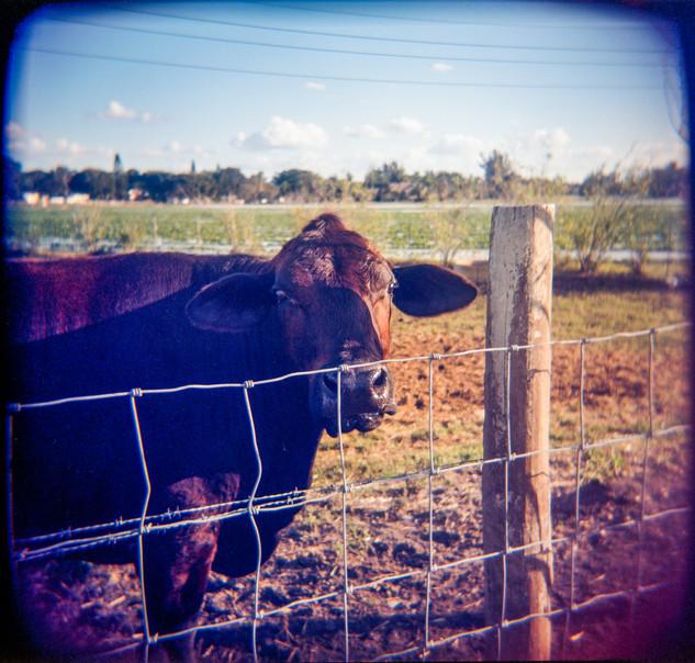 Farmland Series #35