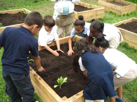 School gardens 1.png