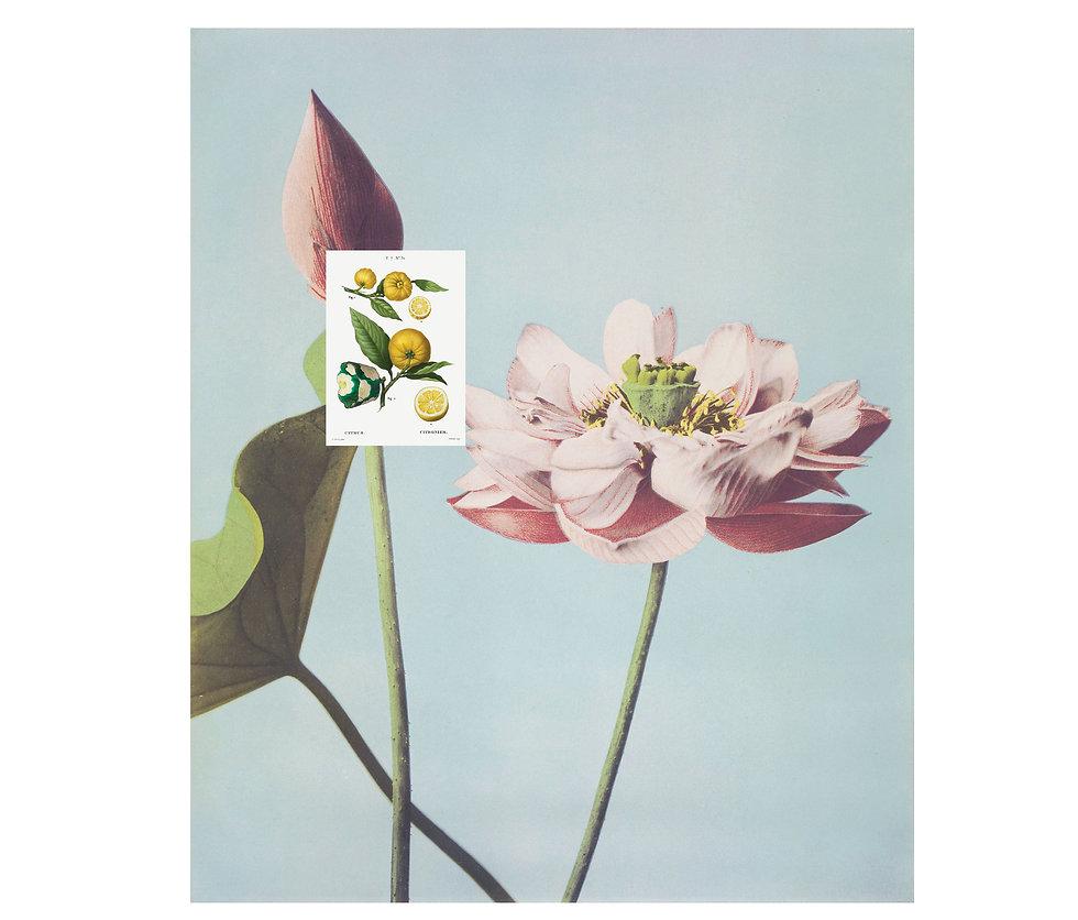 Flower+Lemon.jpg