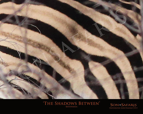 The Shadows Between