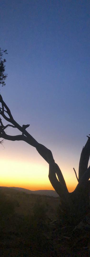 Sunset on the wildlife reserve