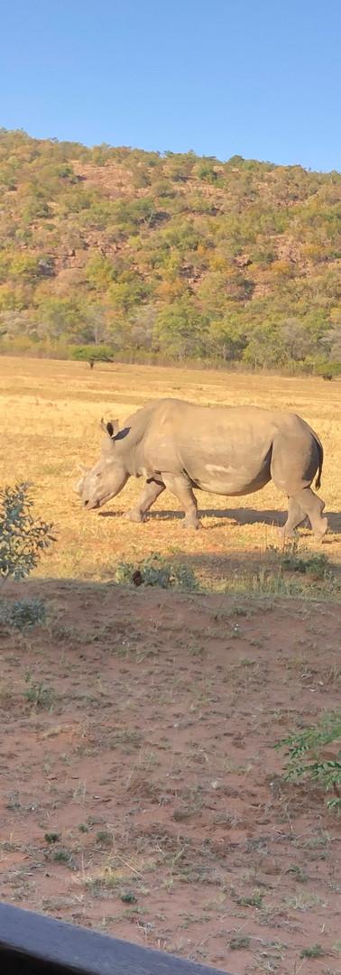 Katie monitoring the rhino