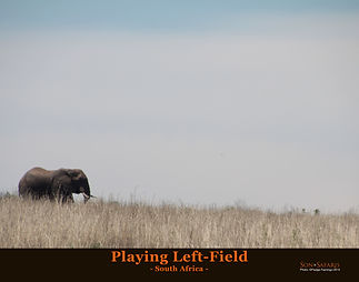 Playing left field 11x14 2018.jpg
