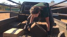 Emily unloading salt blocks across the reserve