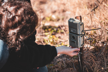 Reseting the camera traps that monitor the wildlife