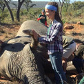 Rachel with a large male elephant that our Christ-centered creation care teams were helping place a GPS radio collar on to protect it agaisnt poaching