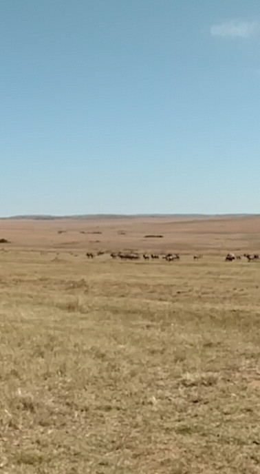 Grace and Katie on the southern plains looking at the zebra and wildebeest