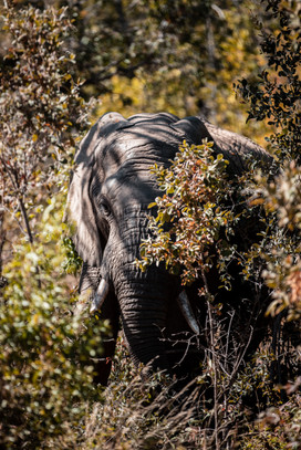 A beautiful elephant tucked in the trees