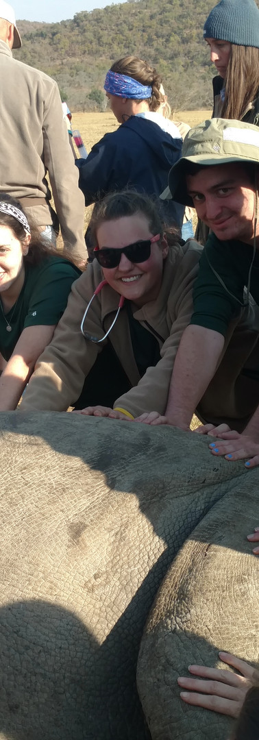 Our Christ-centered creation care teams helping the vets while they microchip a rhino