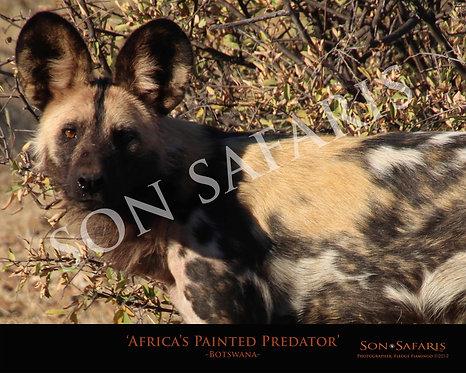 Africa's Painted Predator