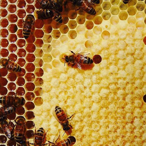 Bees Wax 80g