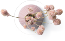 pinkfluffyflower.png