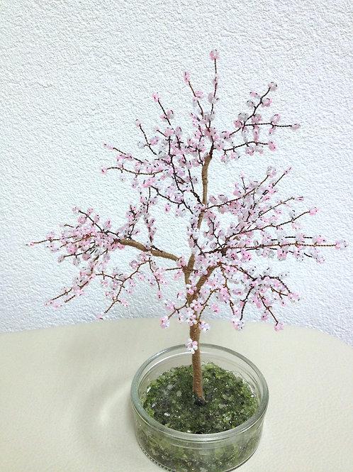 AP0512  Sakura (japanische Kirsche)