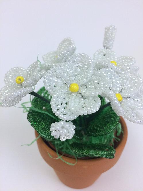 AP0455 Frühlingsgruß weiß