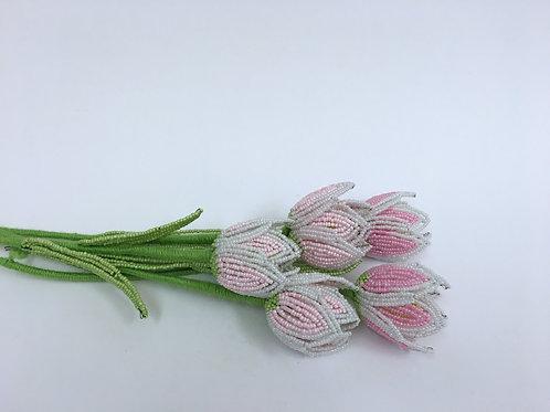 AP0454 Tulpen