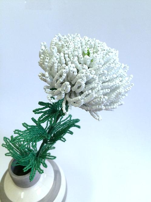 AP0451 Chrysantheme