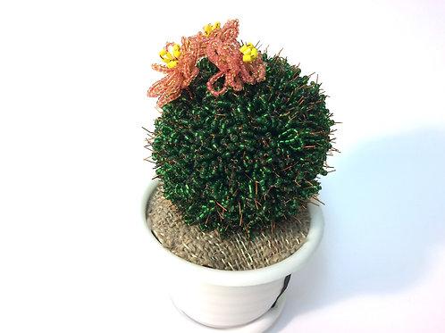 AP041  Kaktus K