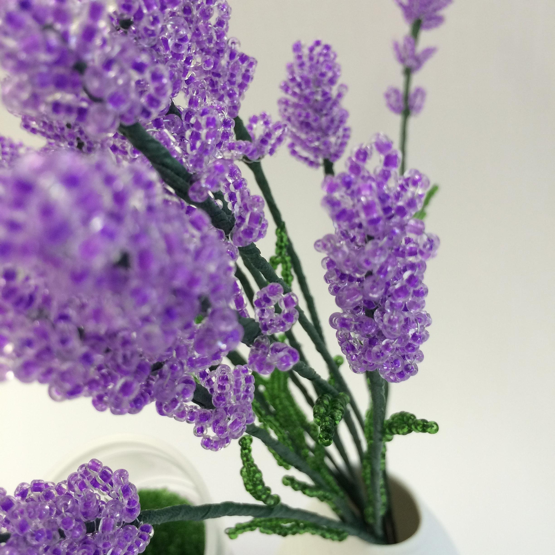 DVD-1 Lavendel