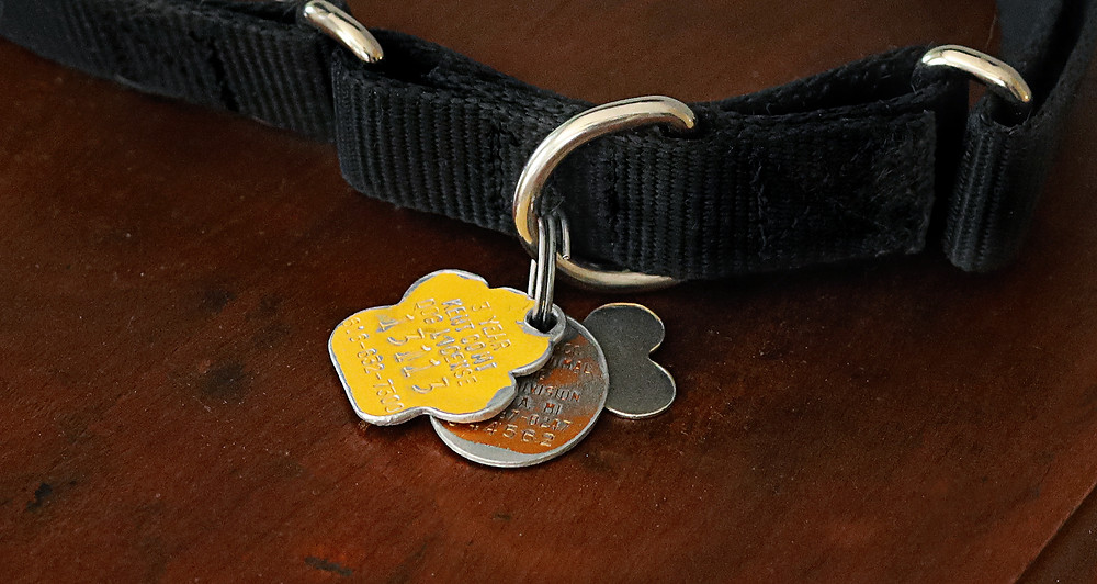 Collar with rabies and Kent County Dog License tags