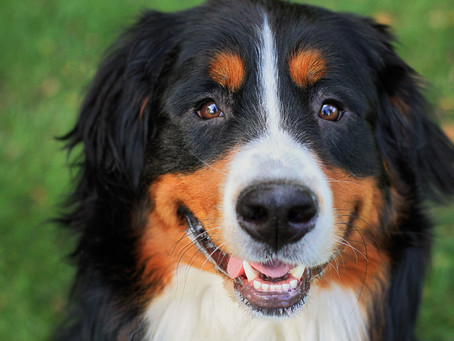Kent County Dog License