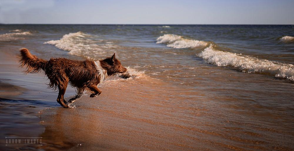 Dog enjoying the water at Michigan Dog Friendly Beaches
