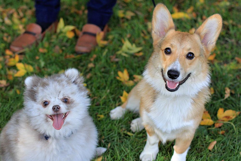 Two dogs enjoying Orion Oaks Dog Park