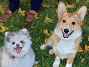 Orion Oaks Dog Park