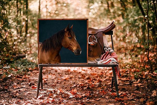 WoodsSaddleFrame horse 2 JPG.jpg