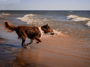 Michigan Dog Friendly Beaches