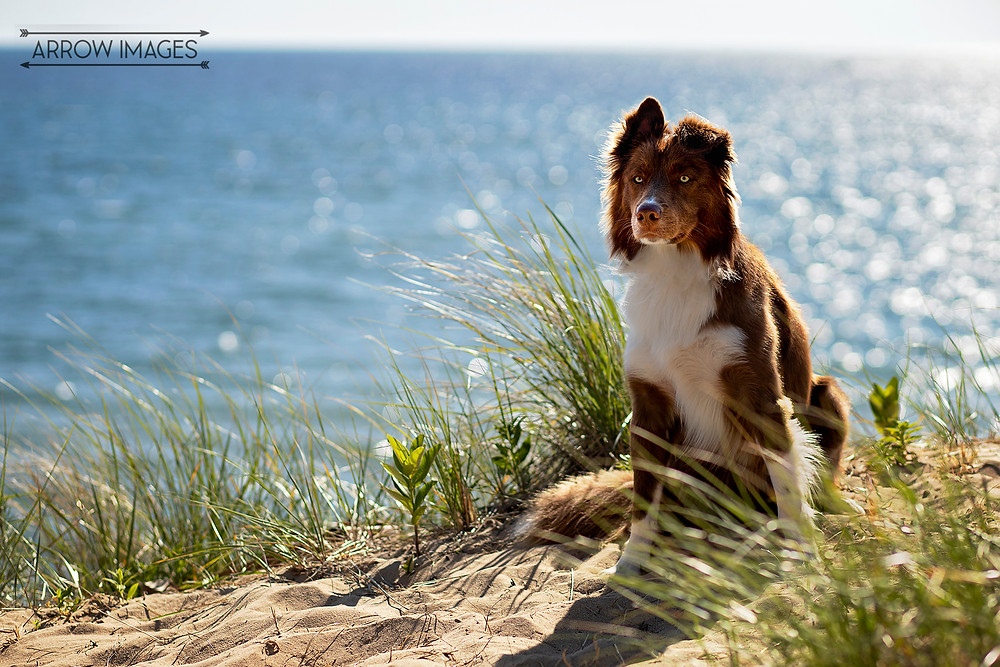 Michigan Dog Friendly Beaches where you can spend time with your pet